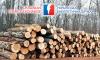 Кількість покупців на торгах необробленою деревиною збільшилася вдвічі
