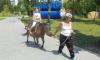 Городские власти считают, что пони в детском парке Сум не эксплуатируют