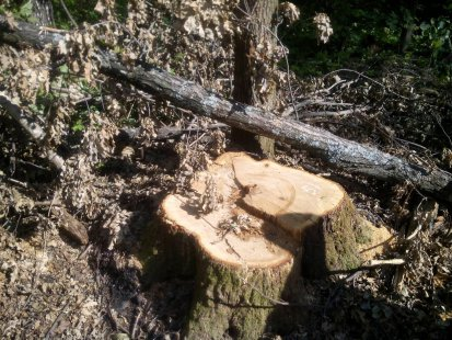 Лесби куни у дерева в лесу фото русскую красивую тещу