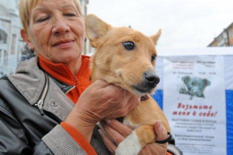 Возьмите собаку. Волонтеры искали животным новых хозяев.
