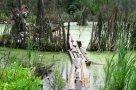 Природа наступает. Еще несколько лет назад на месте этого болота были огороды.