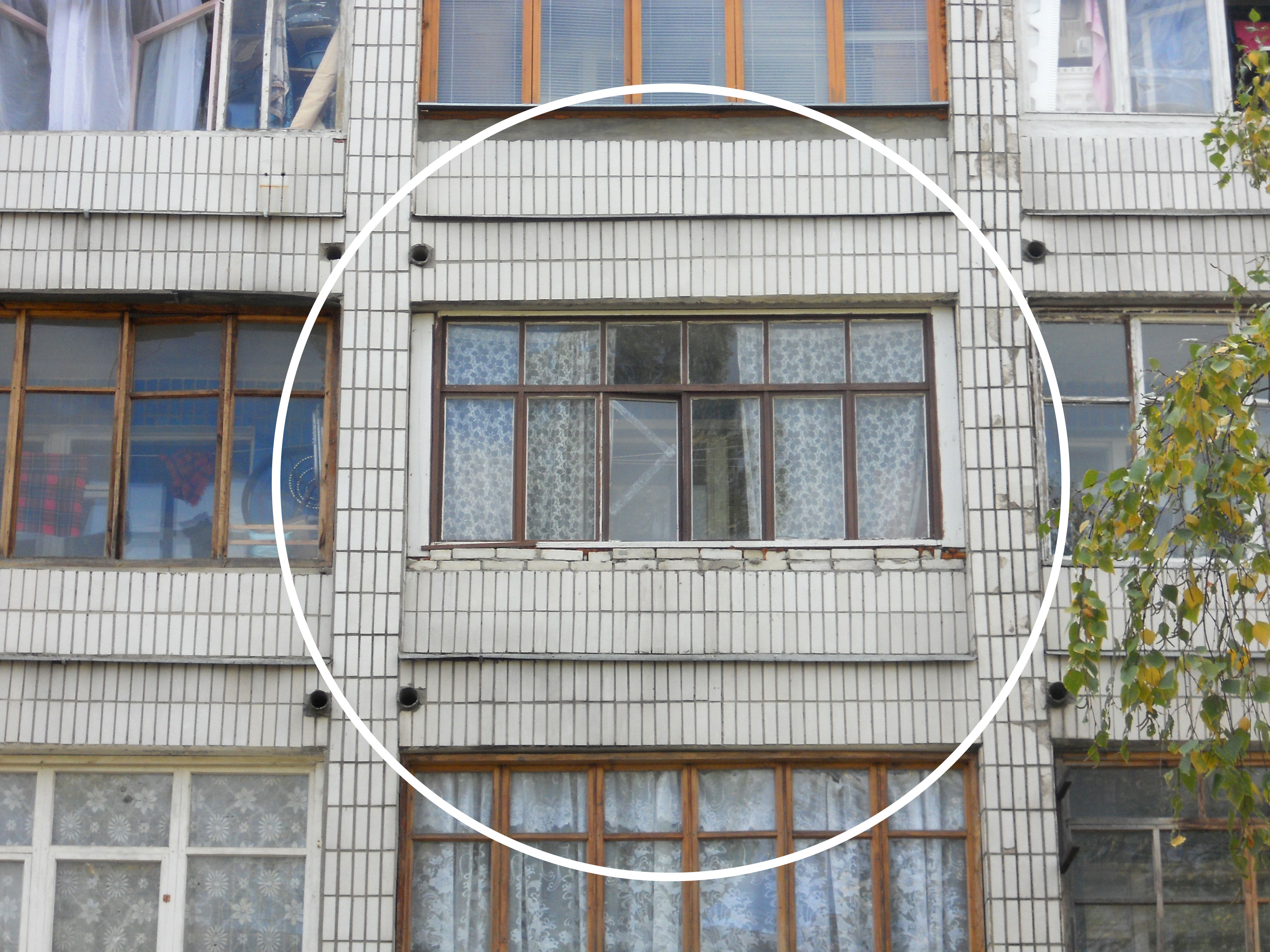 Соседка в окне 13 фотография